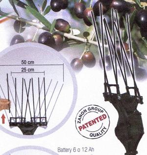 12v Mambo Karbonium olive Picker