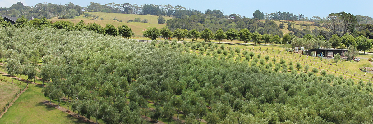 The Olive Grove Supply Company